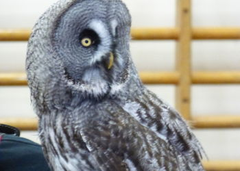 Xtreme Falconry brings birds of prey to Year 7